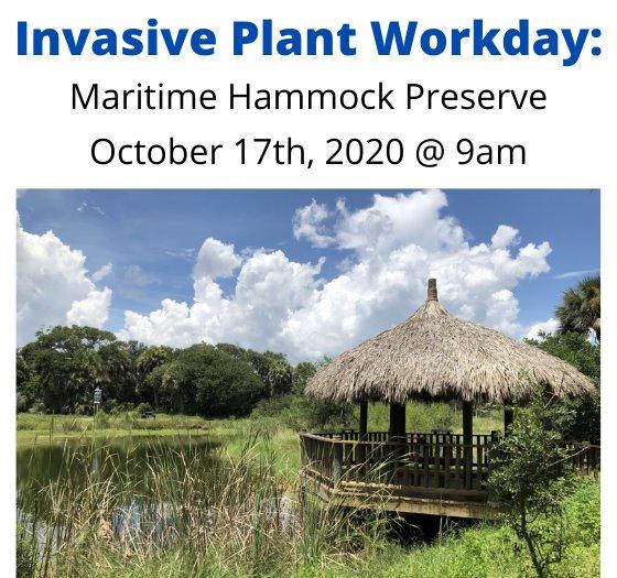 Work day at Maritime Hammock