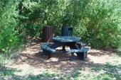 Picnic Table in Maritime Hammock