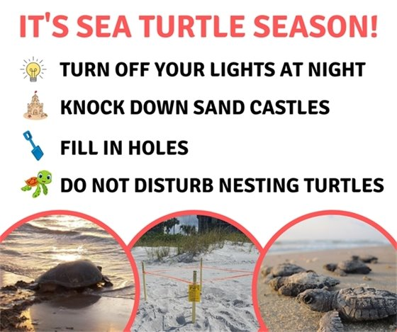 Sea Turtle Season: Lights out May 1st to October 31st, Knock down sand castles, fill in holes, do not disturb nesting turtles