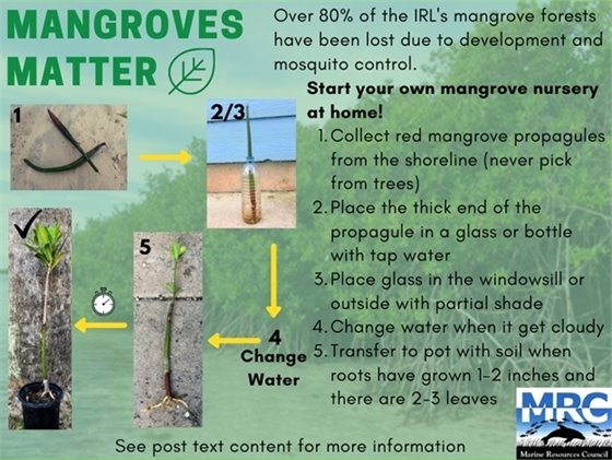 Mangroves Matter: content on page