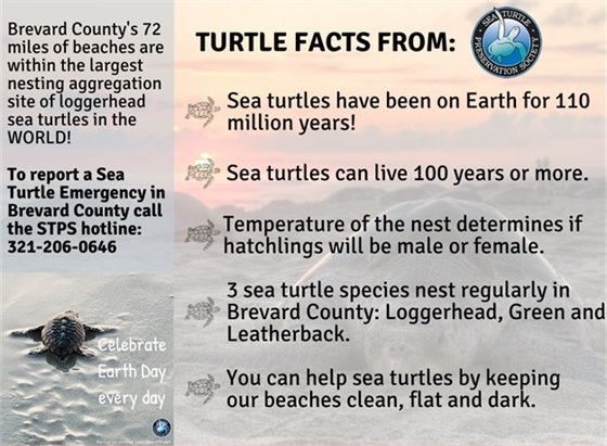 Sea Turtle Graphic. Content on page