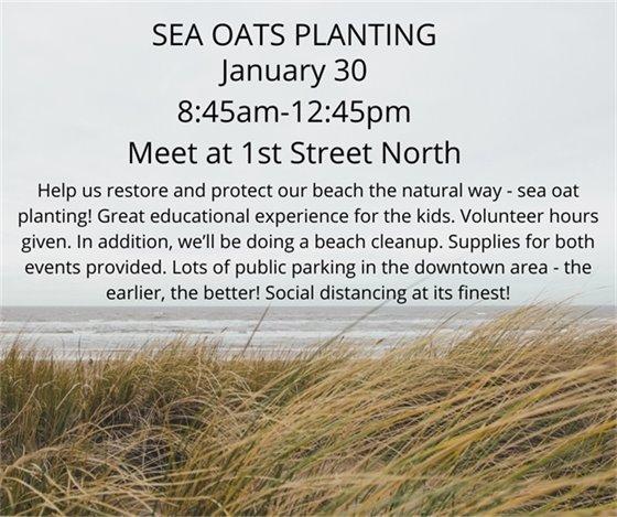 Sea Oats planting